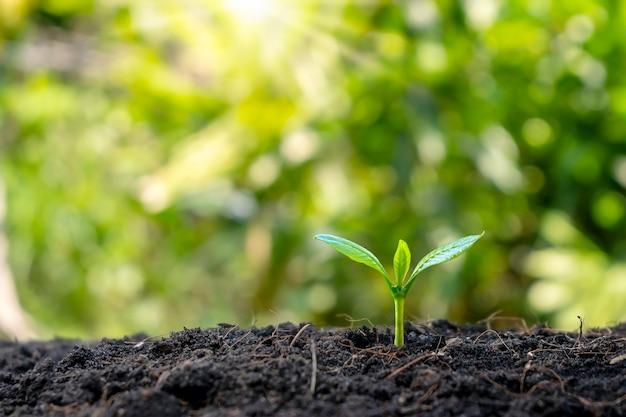 Małe drzewa z zielonymi liśćmi, naturalny wzrost i światło słoneczne, koncepcja rolnictwa i zrównoważony wzrost roślin.