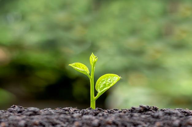 Małe drzewa z zielonymi liśćmi, naturalnym wzrostem i światłem słonecznym, koncepcja rolnictwa i zrównoważony wzrost roślin.