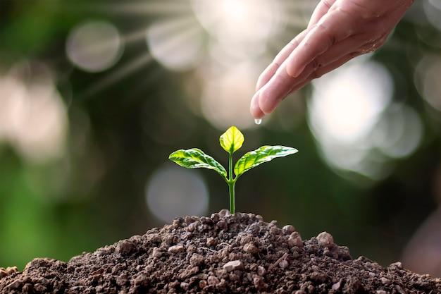 Małe drzewa z zielonymi liśćmi, w tym podlewane ręce, drzewa rosnące na ziemi