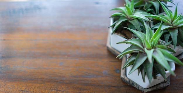 Małe drzewka w doniczkach z kopią miejsca na drewnianym stole