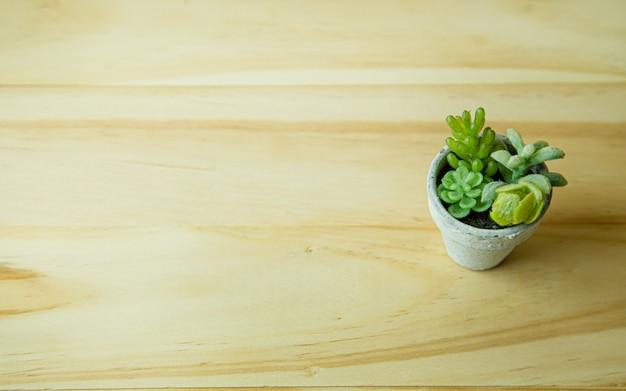 Małe drzewo i biała roślina na stole z drewna dla zawartości tła.