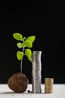 Małe drzewo i monety stos na ciemnym tle
