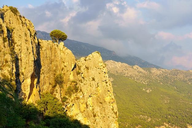 Małe drzewo na szczycie skalistego klifu ze złotym światłem o zachodzie słońca.