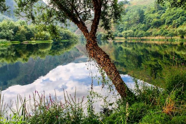 Małe drzewo obok rzeki otoczone bluszczem i bujną roślinnością. asturias. hiszpania.