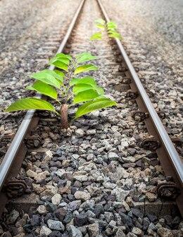 Małe drzewo pochodzenia na kolei
