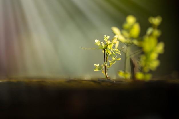 Małe drzewo rośnie pod światłem