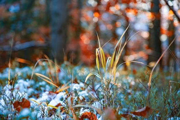 Małe drzewo stoi pokryte śniegiem wśród dużych drzew na polanie pośrodku dużego gęstego lasu w karpatach. wideo uhd 4k w czasie rzeczywistym
