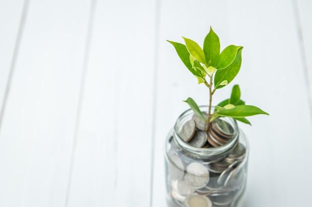 Małe drzewo wyrosłe ze szklanej butelki pełnej monet na białym drewnianym stole. oszczędność pieniędzy.