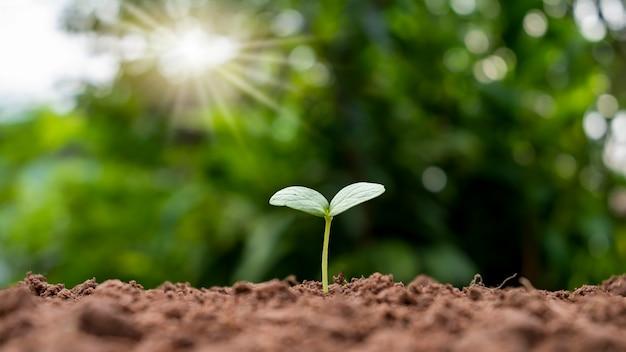 Małe drzewo z zielonymi liśćmi koncepcja naturalnego wzrostu roślin w rolnictwie i zrównoważony wzrost roślin