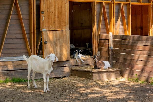 Małe dzieci na farmie w letni dzień. cudowne zwierzaki.