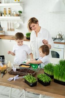 Małe dzieci pomagają mamie w kuchni sadzić i napełniać mikrozieloną wodę