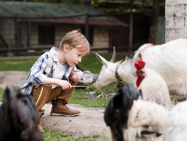 Małe dziecko bawi się ze zwierzętami hodowlanymi