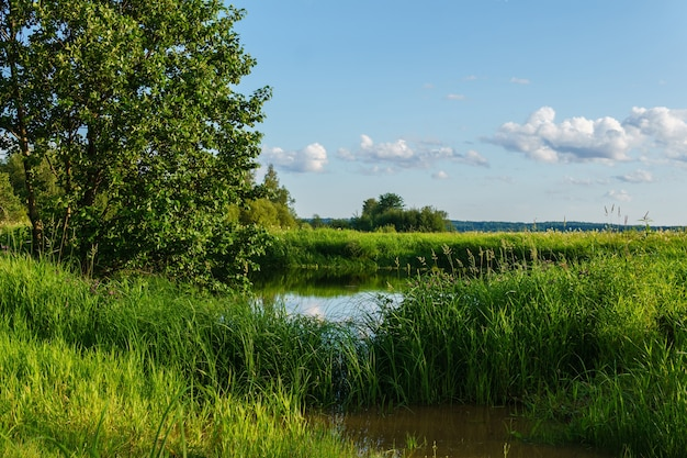 Małe jezioro z trzcinami wśród mokradeł w delcie rzeki