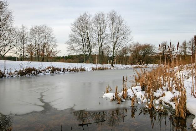 Małe jezioro zimą z lodem i wodą. w kanale lodowym z wodą. rośnie dużo wysokich trzcin. za jeziorem rośnie wiele drzew.