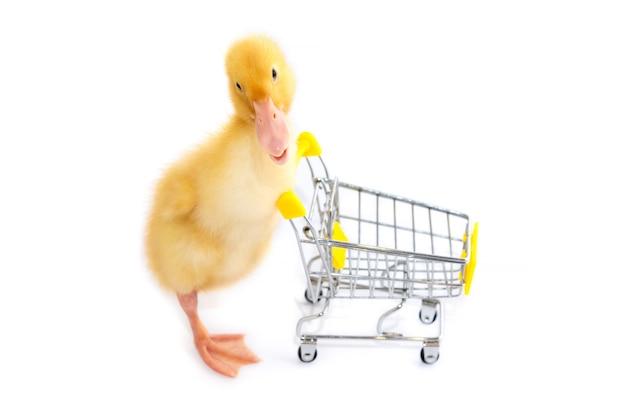 Małe kaczątko prowadzi wózek na zakupy. białe tło na białym tle.