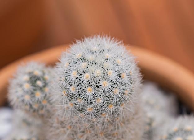 Małe kaktusy i rośliny pustynne