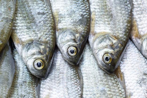 Małe karpie są ułożone w rzędzie jako tło. tło ryb