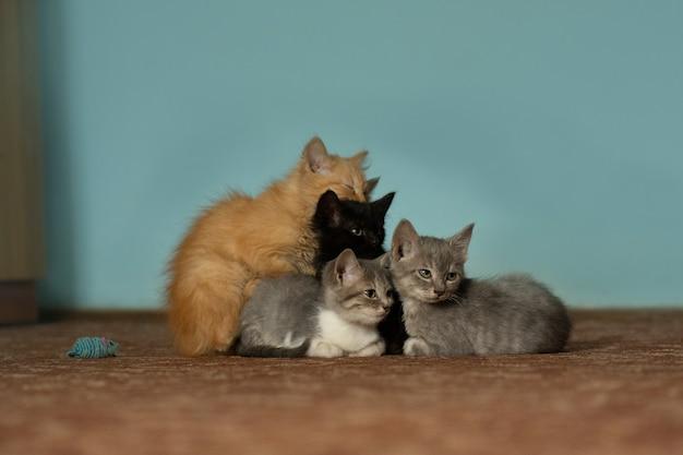 Małe kocięta różnych ras siedzą razem. pięć małych kociąt. pięć ślicznych kociąt. portret kociąt grupowych