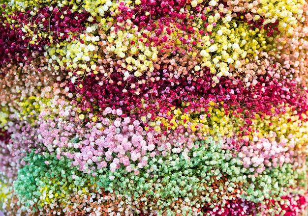 Małe kolorowe kwiaty w tle z bliska