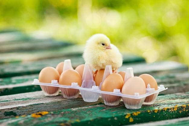 Małe kury i jajka na drewnianym stole.