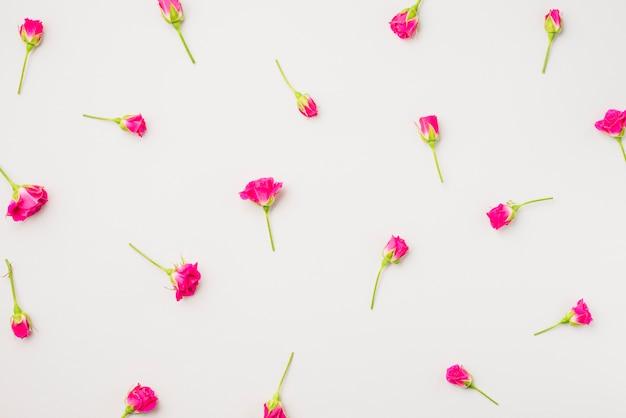Małe kwiaty fuksja