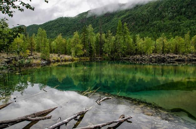Małe leśne jezioro z zielonkawą wodą i pniem drzewa w lesie jesienią, jezioro lawy