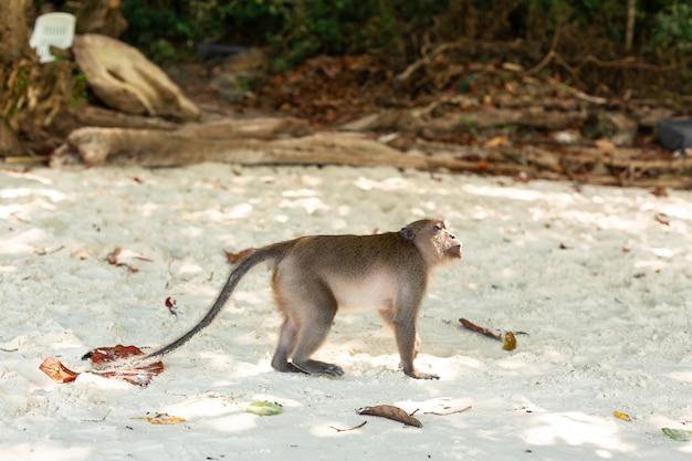 Małe małpkie młode życie na tropikalnej wyspie.