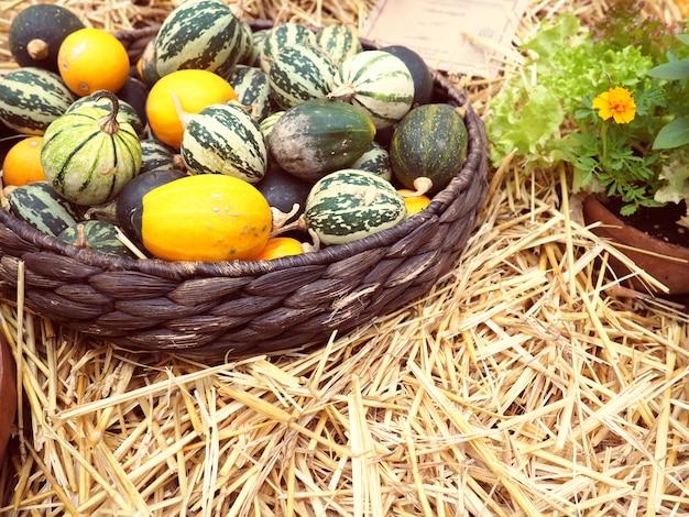 Małe melony i arbuzy są w koszu, jesienią i zbiorach