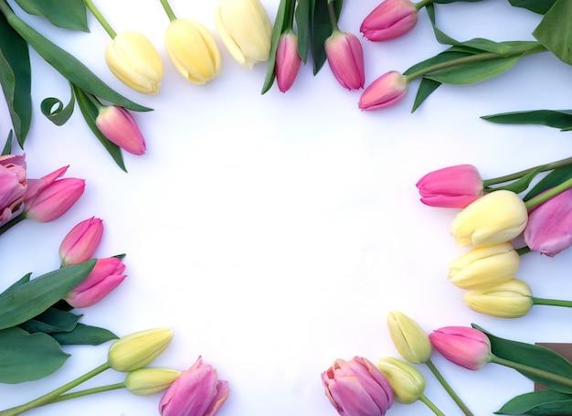 Małe piękne tulipany na białym tle ułożone w okrąg