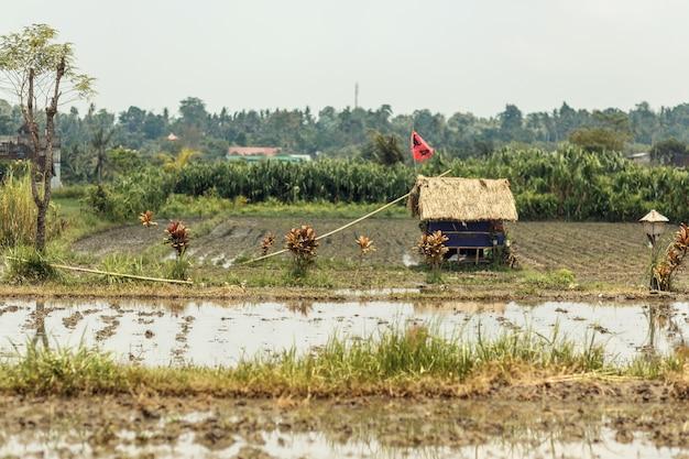 Małe pole ryżowe w azjatyckiej wiosce. na środku pola znajduje się mały dom ze słomianym dachem.