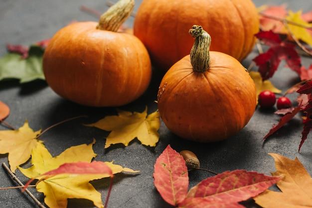 Małe pomarańczowe dynie i jesienne liście klonu na ciemnoszarym tle