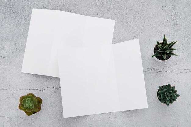 Małe rośliny obok broszur