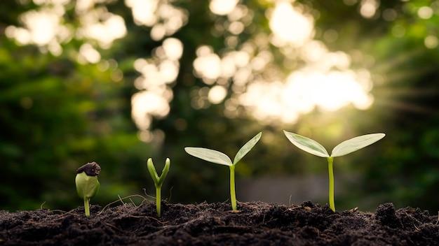 Małe rośliny rosnące w glebie z rozmytym tłem roślinności z promieniami słonecznymi
