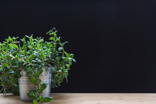 Małe rośliny w aluminiowym garnku na drewnianym stole przeciw czarnemu tłu