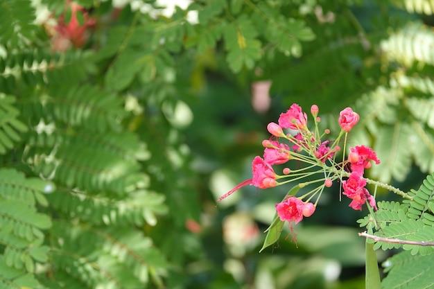Małe różowe kwiaty z niewyraźne tło
