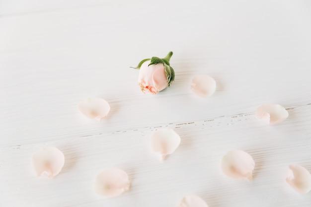 Małe różowe róże z płatkami dookoła na białym drewnianym tle