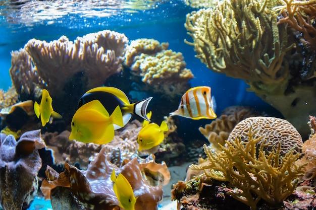 Małe rybki pływające w akwarium na niebieskim tle z glonami w tle. londyn.