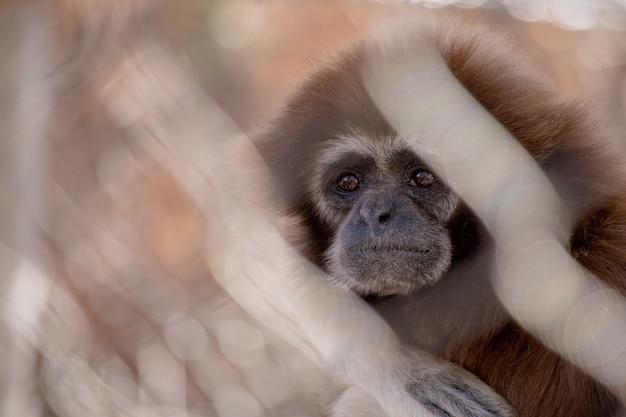 Małe słodkie dziecko małpa z niewyraźne tło
