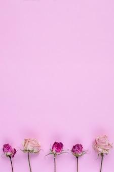Małe suche róże na pastelowym różowym tle,