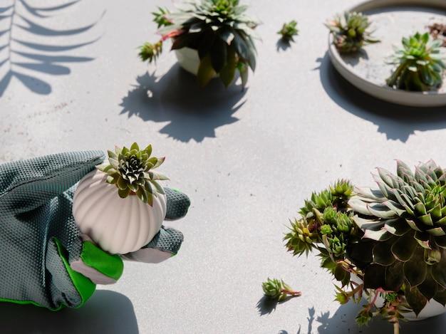 Małe sukulenty i rękawiczki ogrodnicze