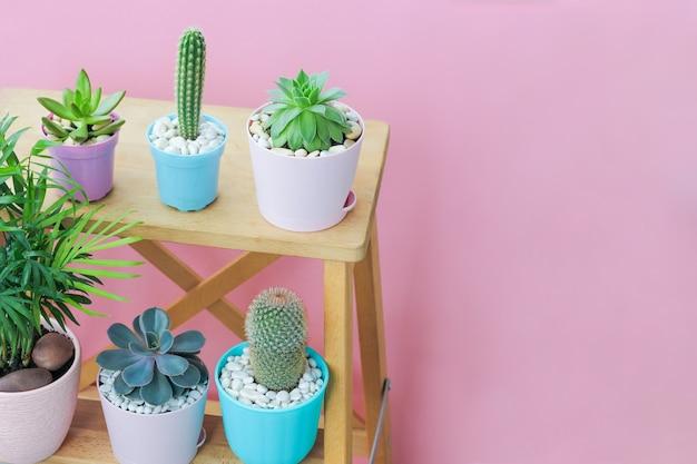 Małe sukulenty w pięknych kolorowych doniczkach stoją na drewnianych półkach na różowym tle