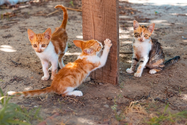 Małe wesołe rude kocięta i jeden szczypce to pazury na drewnianej desce