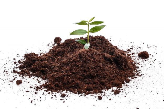 Małe zielone kiełki w glebie
