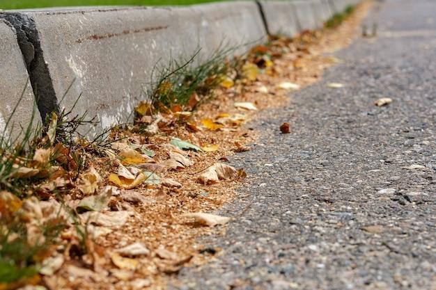 Małe żółte liście leżą wzdłuż betonowych krawężników na utwardzonej drodze.