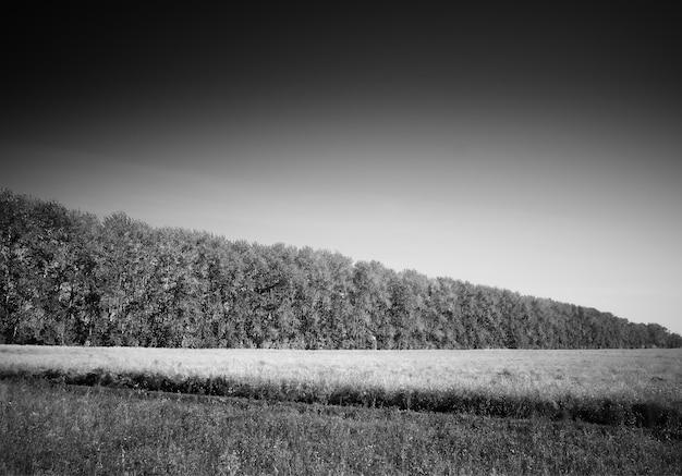 Malejący las na dramatycznym tle łąki