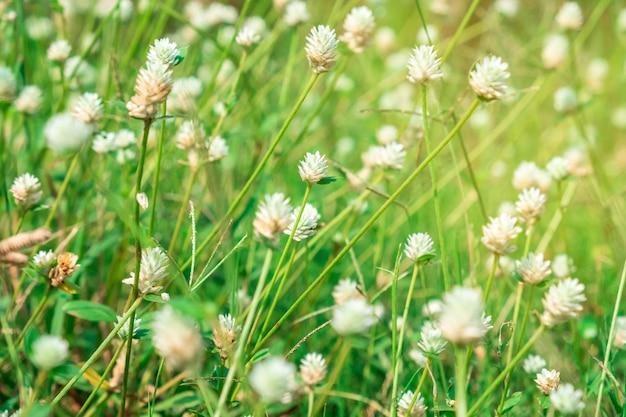 Mali biali kwiaty w polu na pięknym tle. nieostrość.