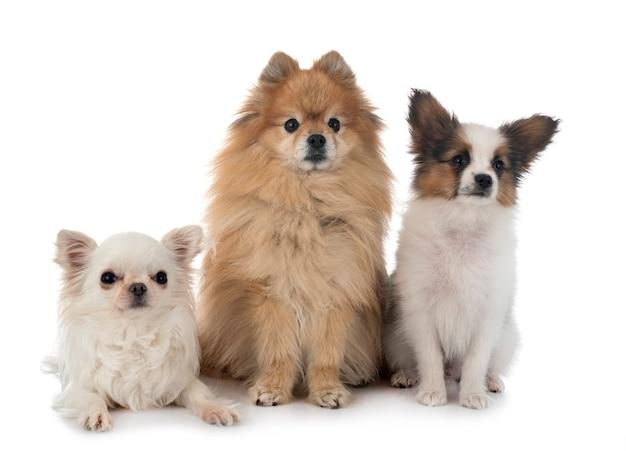 Mali psy odizolowywający na białym tle