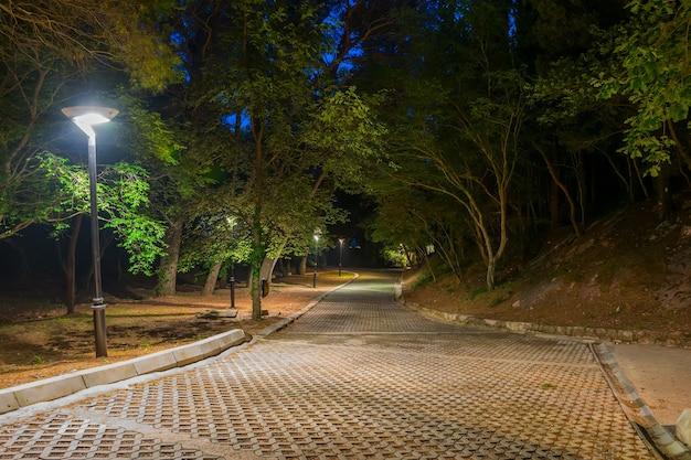 Malownicza alejka wśród drzew w nocnym parku.
