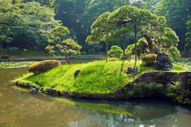 Malownicza japońska sosna na małej zielonej wyspie latem