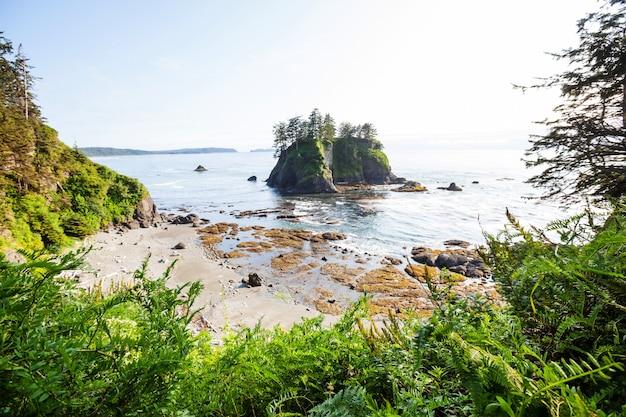 Malownicze i rygorystyczne wybrzeże pacyfiku w olimpijskim parku narodowym, waszyngton, usa. skały w oceanie i duże kłody na plaży.